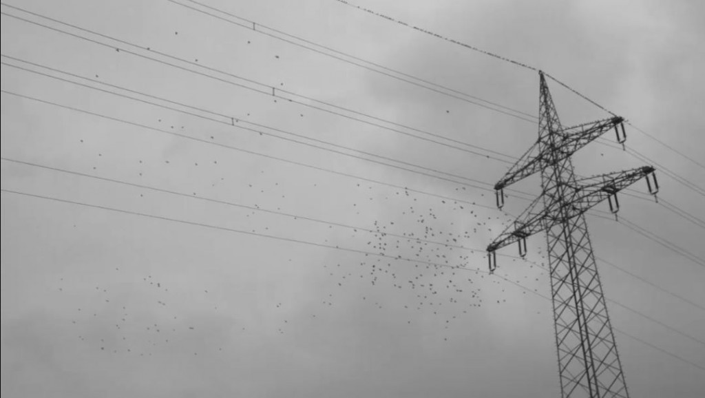 Vögel auf Stromleitungen